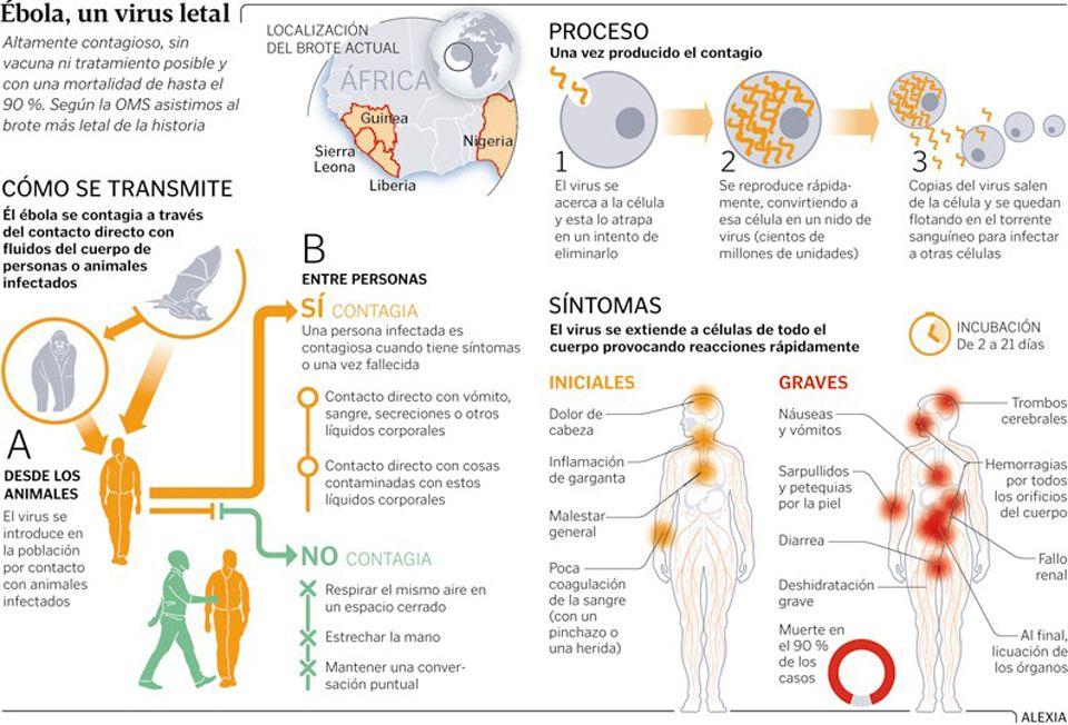 ¿Cómo puede prevenir el vómito?
