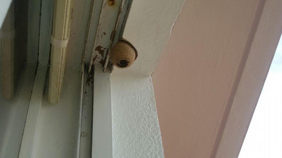 Cómo puedo eliminar los insectos que han establecido un nido dentro de una casa