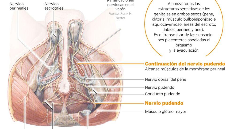 dolor pélvico del nervio pudendo
