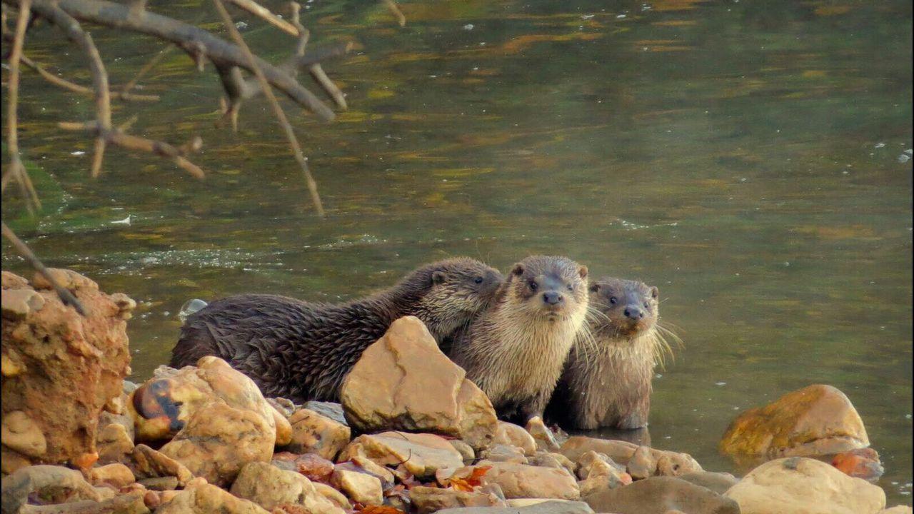 Resultado de imagen de Fauna y flora del Parque Natural de Corrubedo