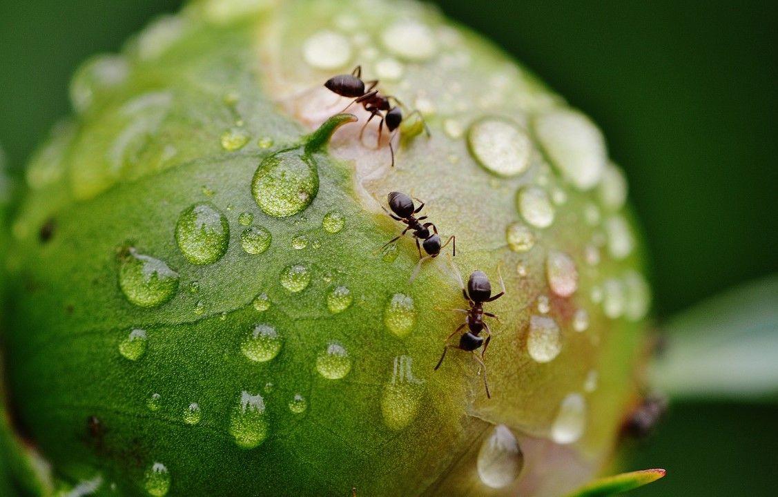 Unas Hormigas Posible Solución A La Resistencia A Los