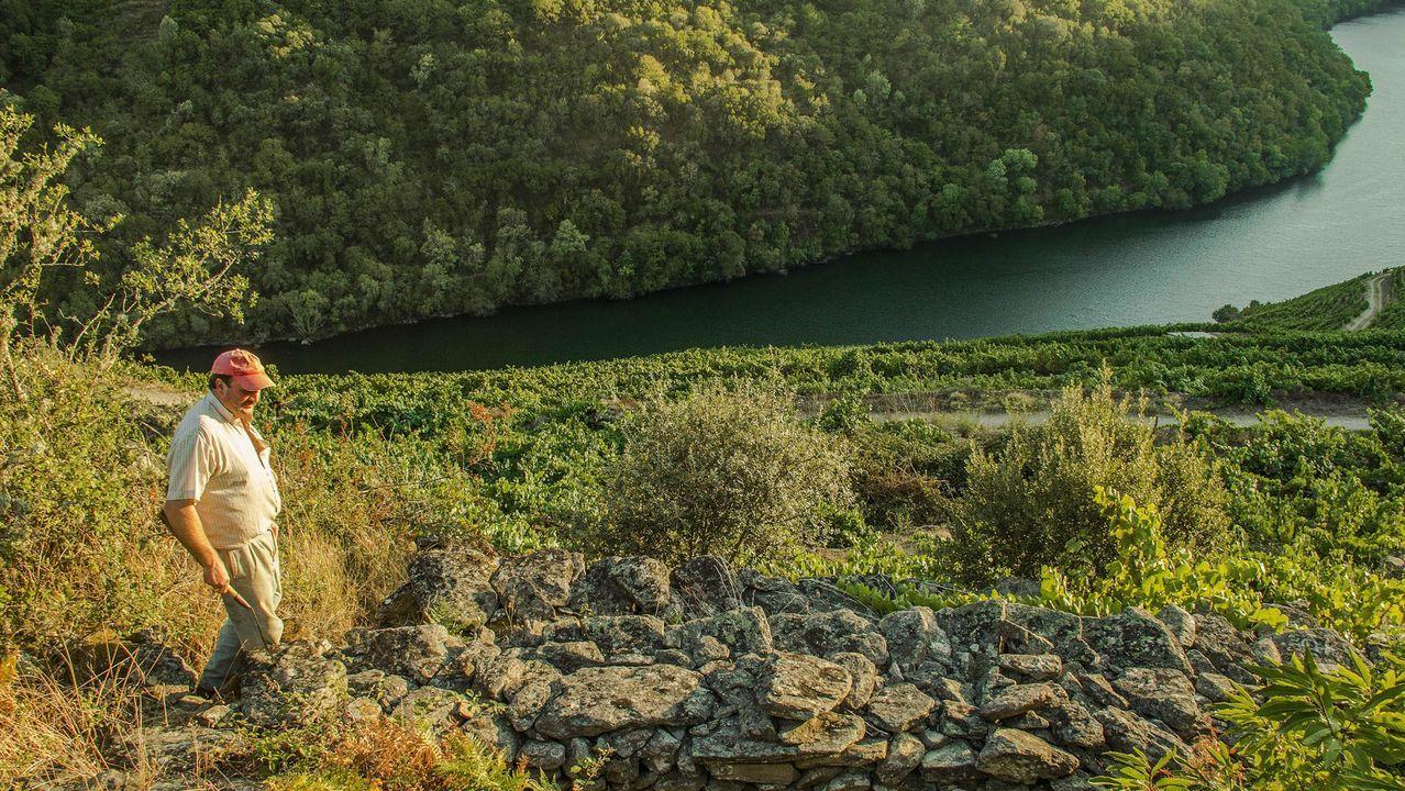 Cuántos Siglos Tienen Las Terrazas Vítícolas De La Ribeira