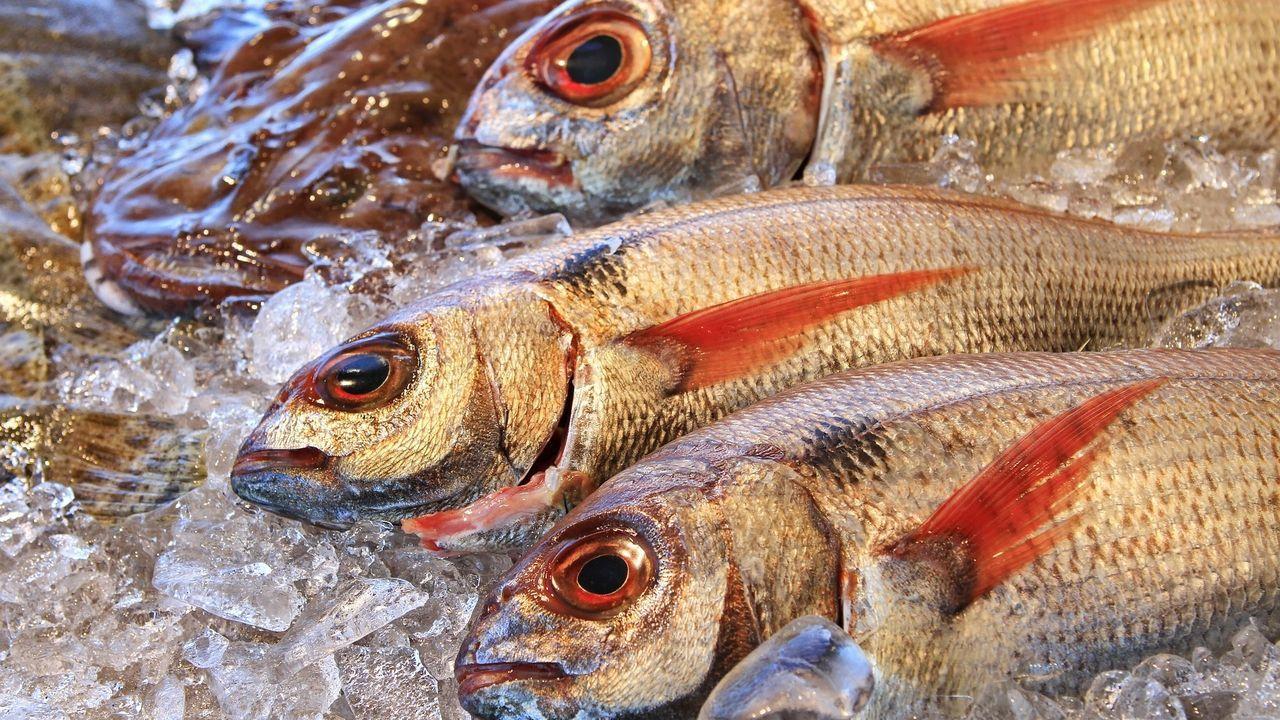 Los Pescados Típicos De Navidad Arrancan Fuerte Su Escalada Dejando Rezagados A Los Mariscos