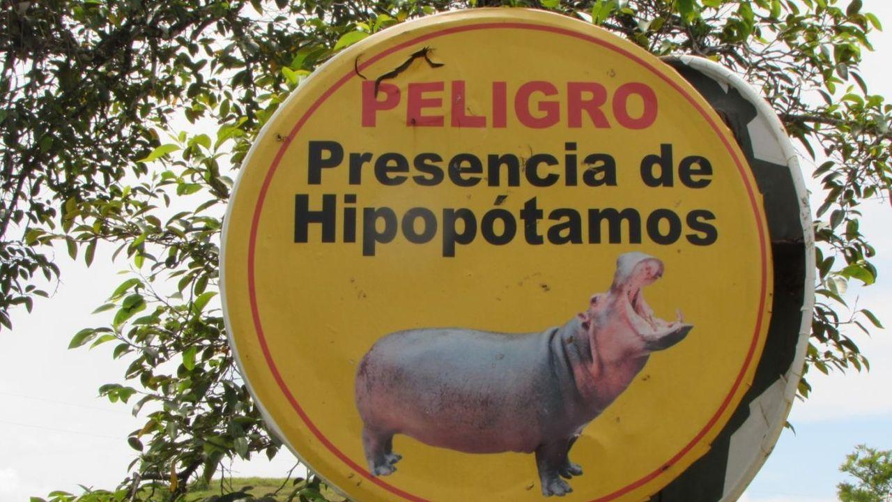 O Mulo en un juicio en la Audiencia de Pontevedra del 2017.Alerta de hipopótamos en la antigua hacienda Nápoles, de Pablo Escobar