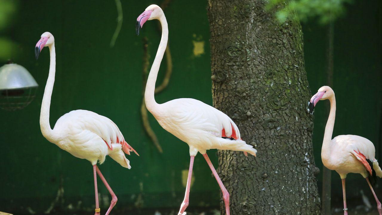 En Avifauna se pueden ver aves de unas 150 especies originarias de todo el mundo. Los flamencos son de los animales más populares