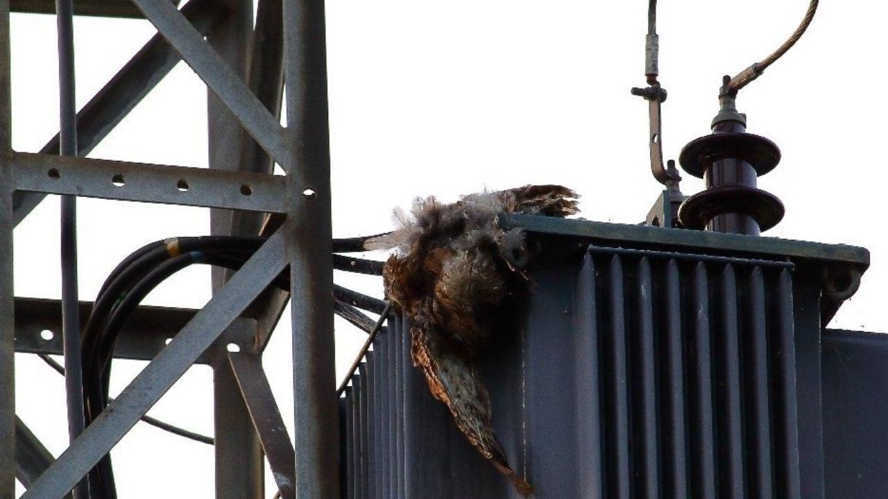 Una ave muerta en el transformador