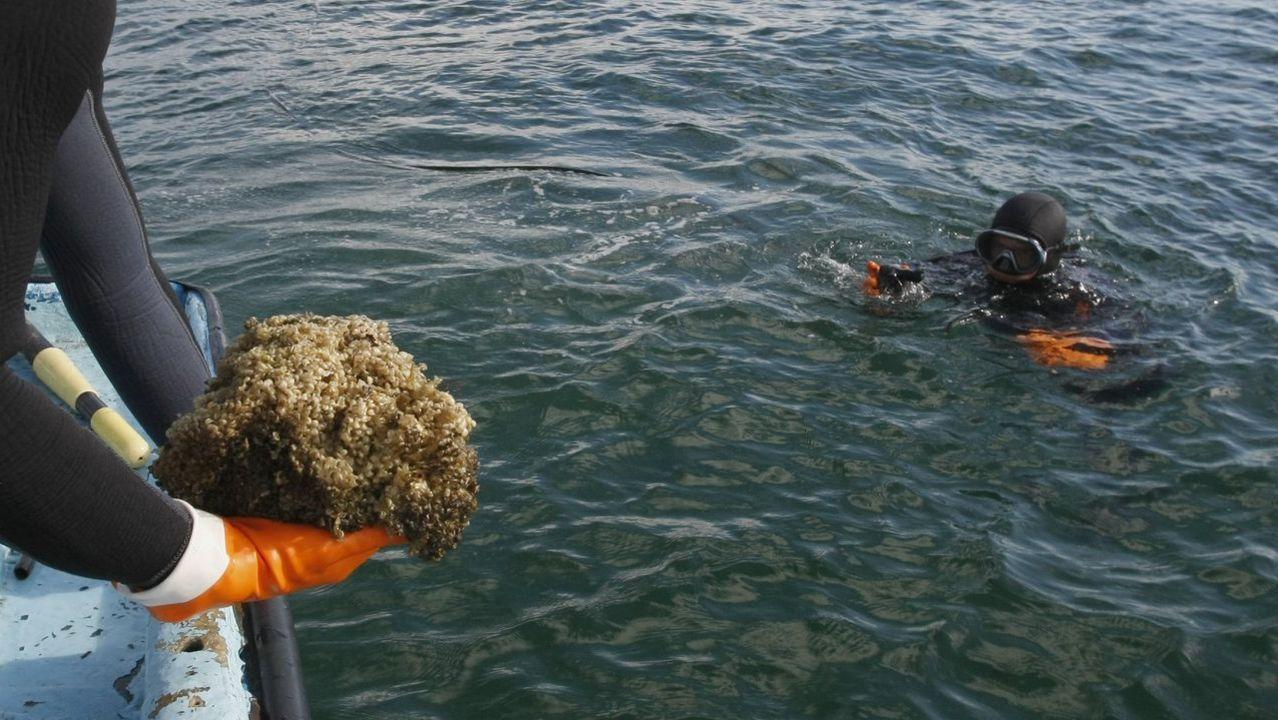Pruebas para socorristas en la playa de A Compostela.Plantación de almendros en Aragón