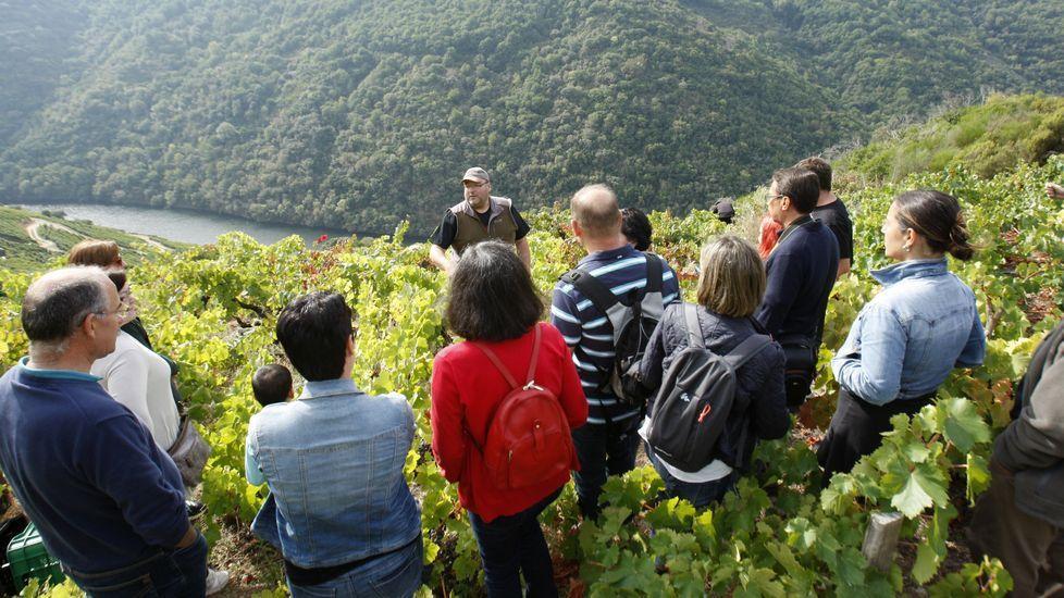 Las fotos de la ruta entre Samos y O Courel.Turistas listos para vendimiar en el Viñobús del 2016