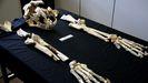 Grande y robusto: así era el león del Paleolítico descubierto en Llanes