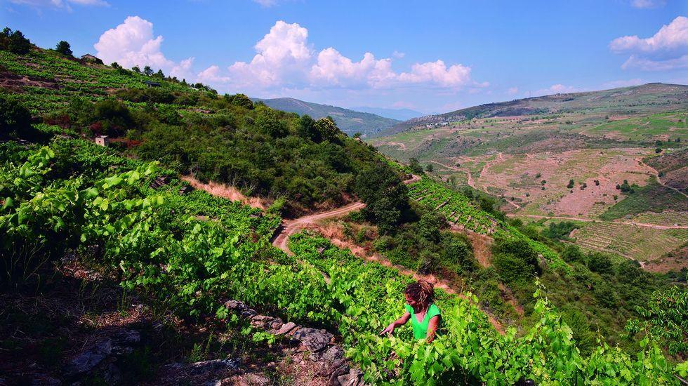 Laura Lorenzo, en sus viñas de O Bibei, durante el rodaje del documental
