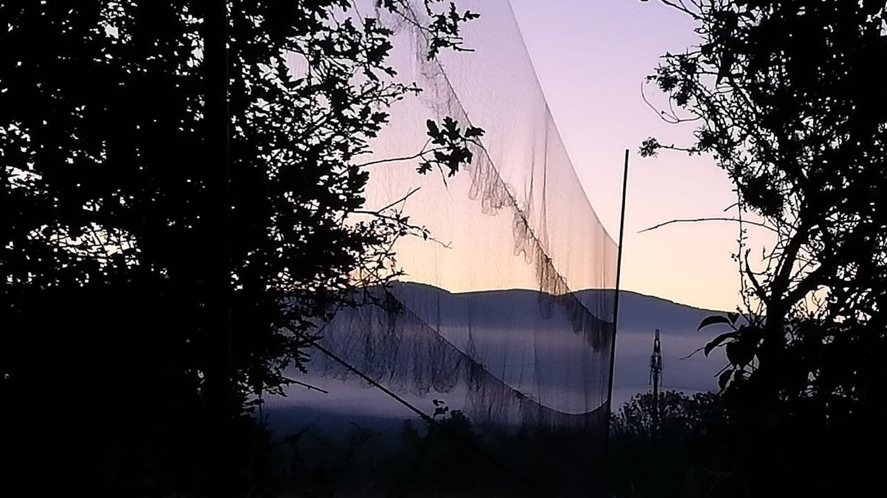 Una de las redes utilizadas para capturar las aves