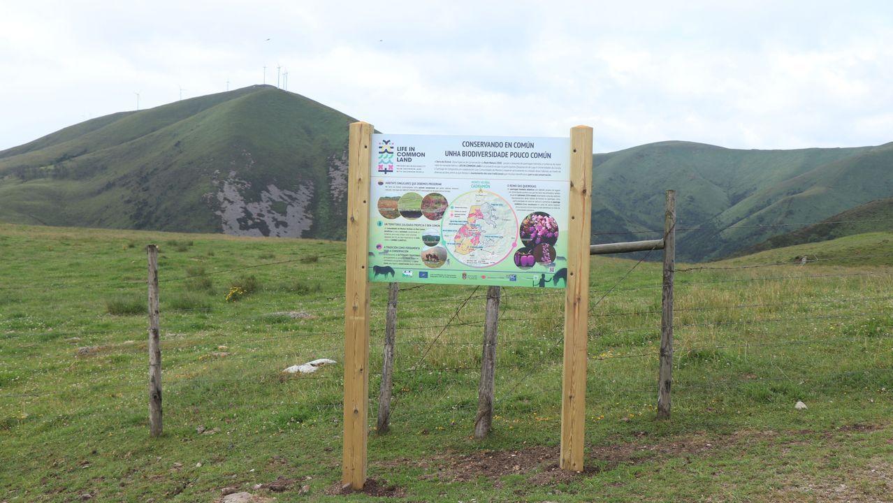 Hallazgos arqueológicos romanos en el rural lucense.Carlos Sinde, con vacas en su explotación, en la parroquia de Loentia (Castro de Rei)