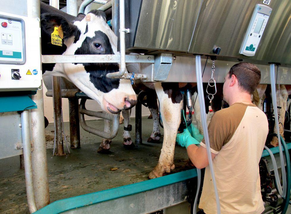 Una explotación láctea en el municipio de Carballo.