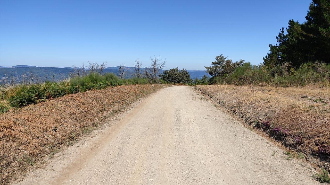 Os Grobos, un bosque propio deTolkien.En algunos tramos se ha colocado zahorra