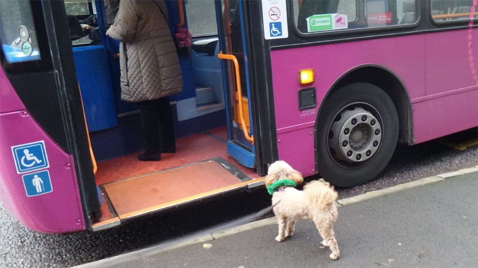 Un perro a punto de subir a un autobús urbano
