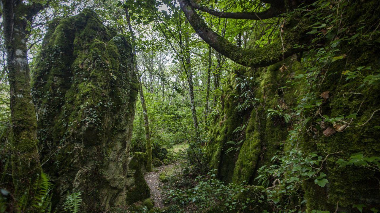 Os Grobos, un bosque propio deTolkien.Colegios como el CEIP de As Gándaras empiezan mañana las clases