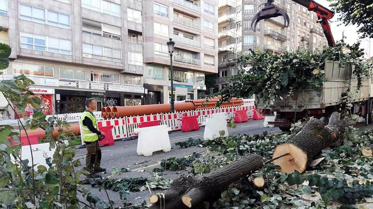 Un camión retira las ramas y los troncos seccionados de la acera
