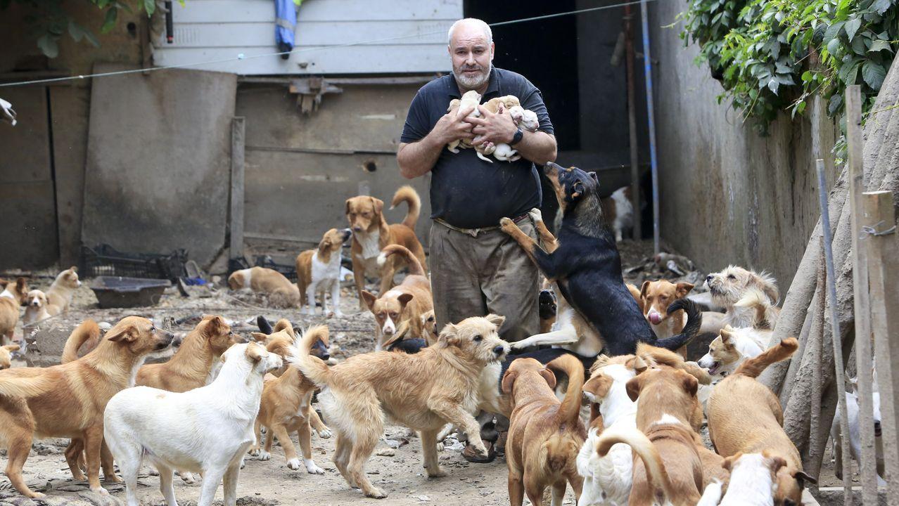 Fernando Fornes llegó hasta la vivienda en el año 2013 y, desde entonces, asegura que se hace cargo de canes abandonados