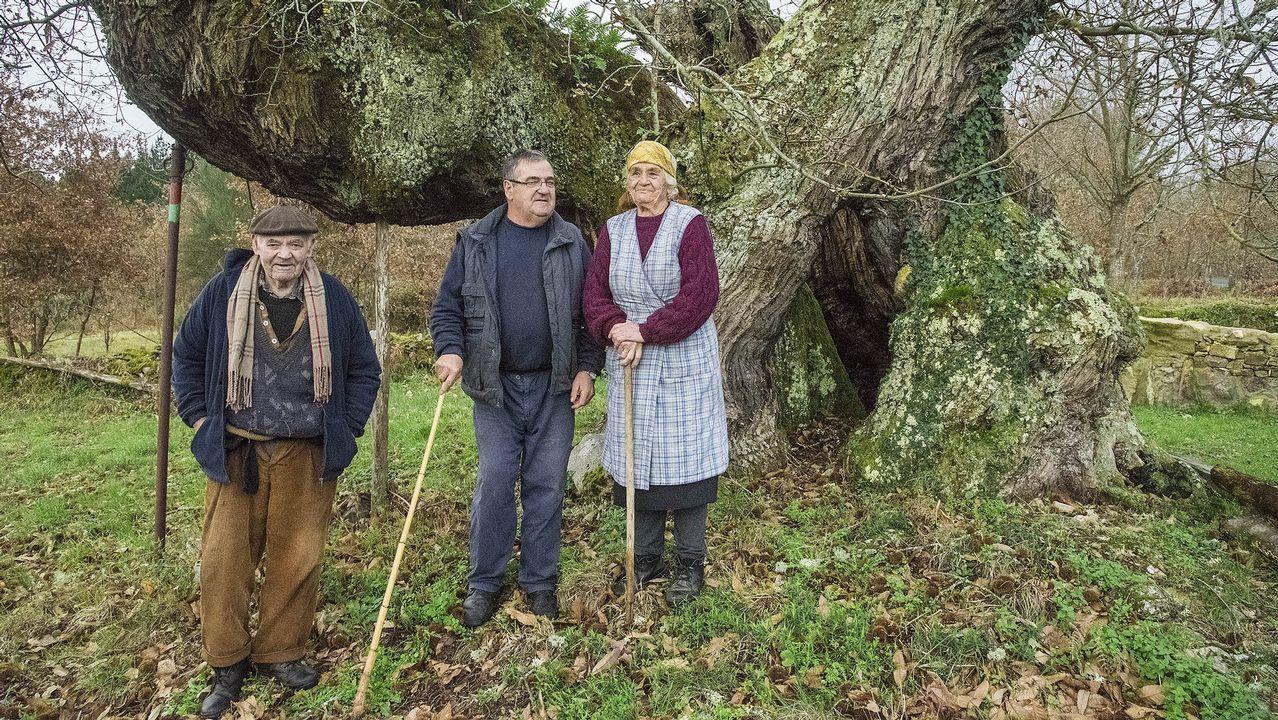 Delmiro, Manuel y Diamantina, vecinos de Cimadevila, ante el castaño centenario