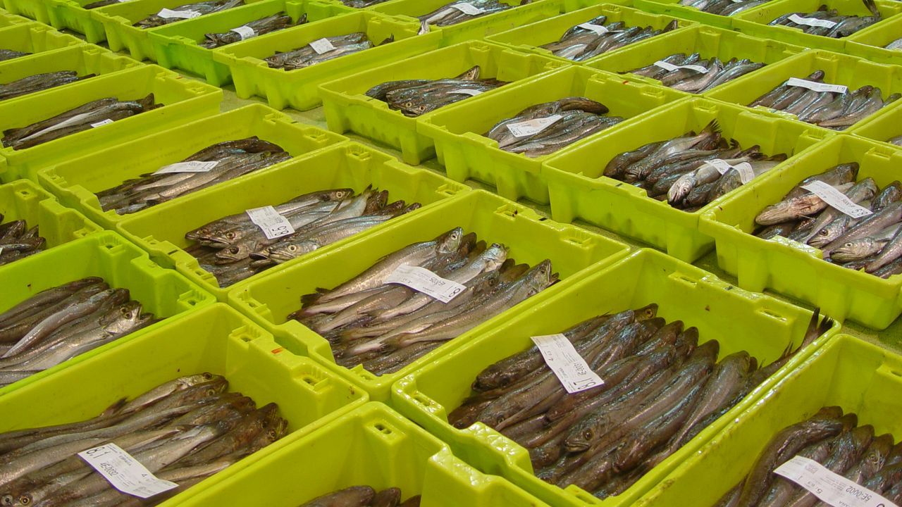Puerto de Celeiro comercializa distintos tipos de merluza fresca de Gran Sol, la misma que dona para ayudar a los más desfavorecidos de Viveiro