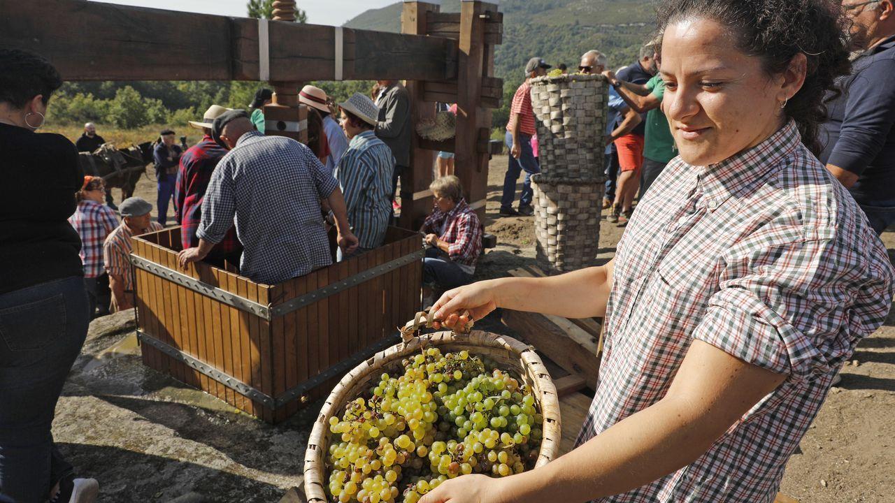 Oímbra recupera la vendimia más tradicional