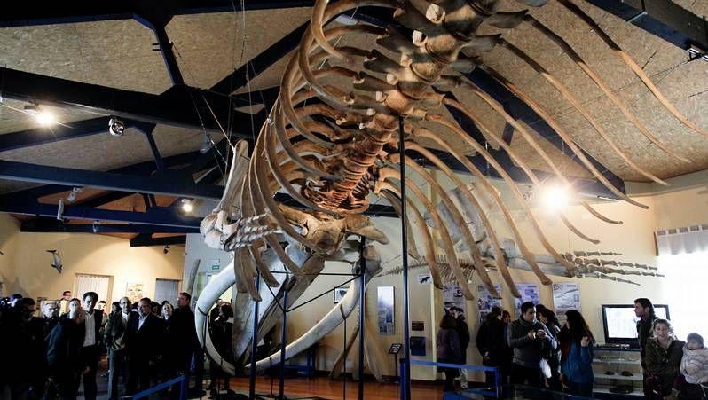 El mamífero logró duplicar su peso en apenas dos meses.
