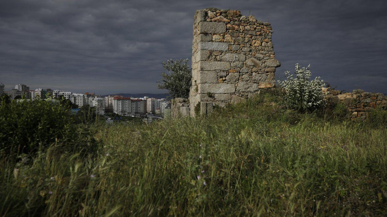 gato.El jardín de San Carlos se construyó en 1834 y acoge veinte ejemplares de «Ulmus x hollandica Mill.» que conforman la única olmeda protegida y catalogada como BIC de Galicia.