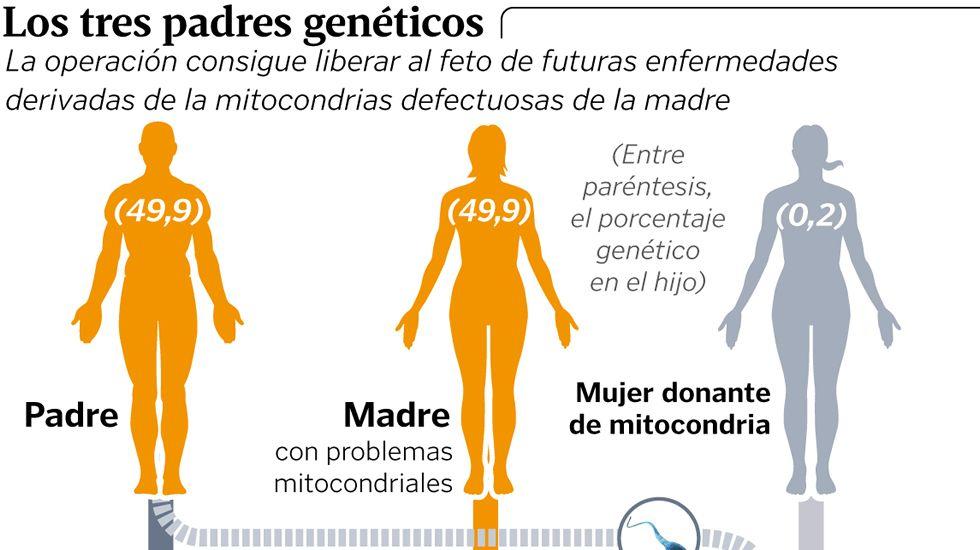 Los tres padres genéticos