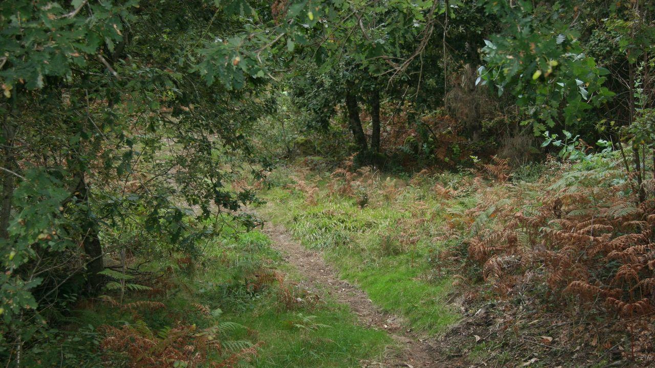 Paseo por el monte entre vegetación en tiempos de semi-confinamiento