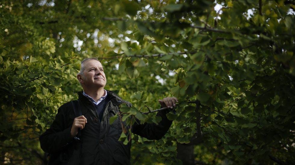 Como los seres humanos, los árboles cuentan su vida por años, y la van registrando en anillos de crecimiento