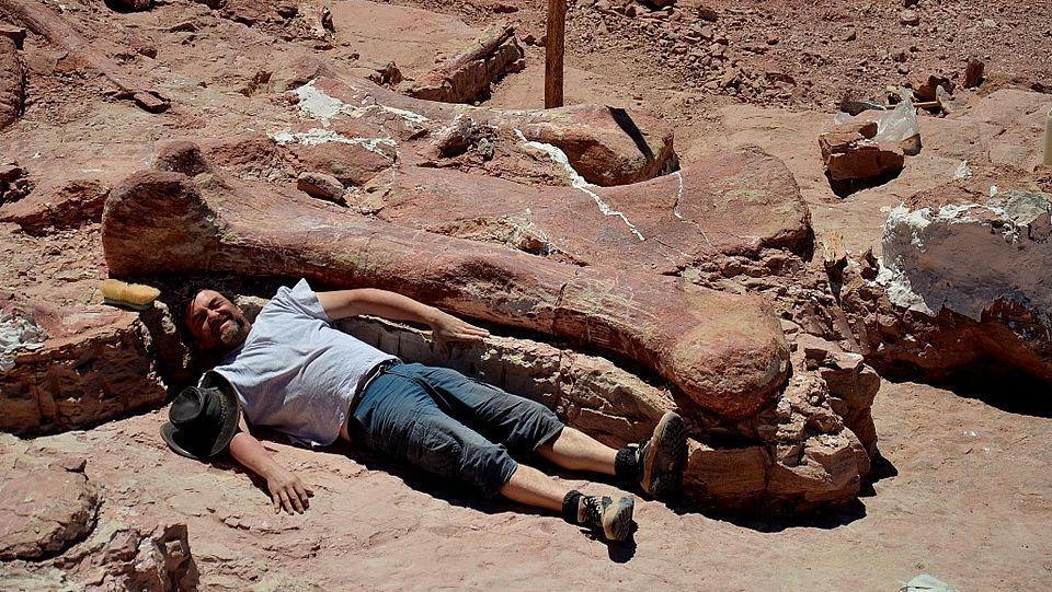 Mary Anning Google Doodle.Huesos de oso cavernario y oso pardo en el museo quirogués