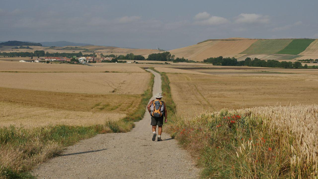 El camino entre campos de trigo