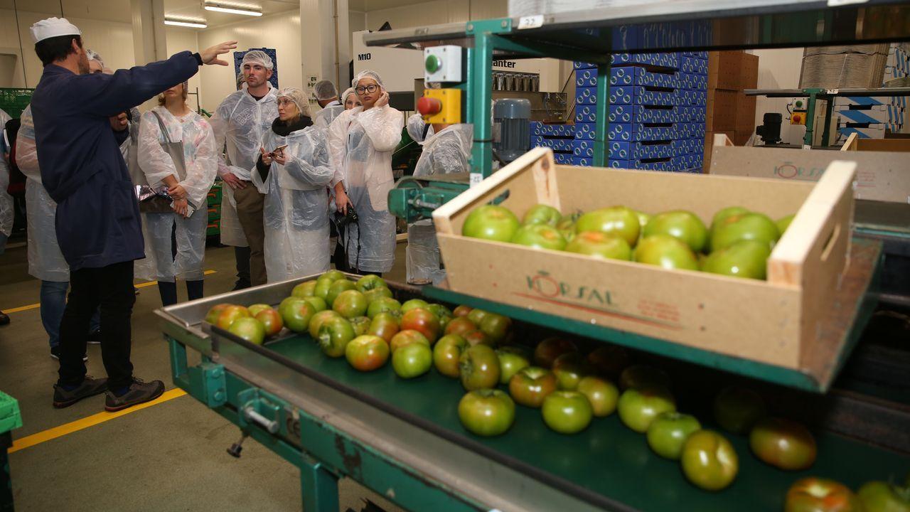 Los agricultores vieron cómo se tratan los tomates en Horsal desde que llegan de la huerta