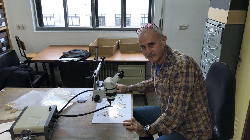 El herbario de algas de E. H. Boning en el Museo Massó.Pilar Iglesias y Carlos de la Iglesia han comenzado a vender a través de Correos Market