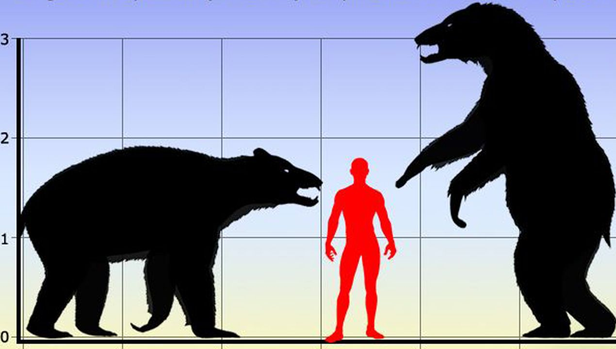 Comparativa de una figura humana respecto a un oso cavernario, un enorme animal que podía llegar a pesar 800 kilos