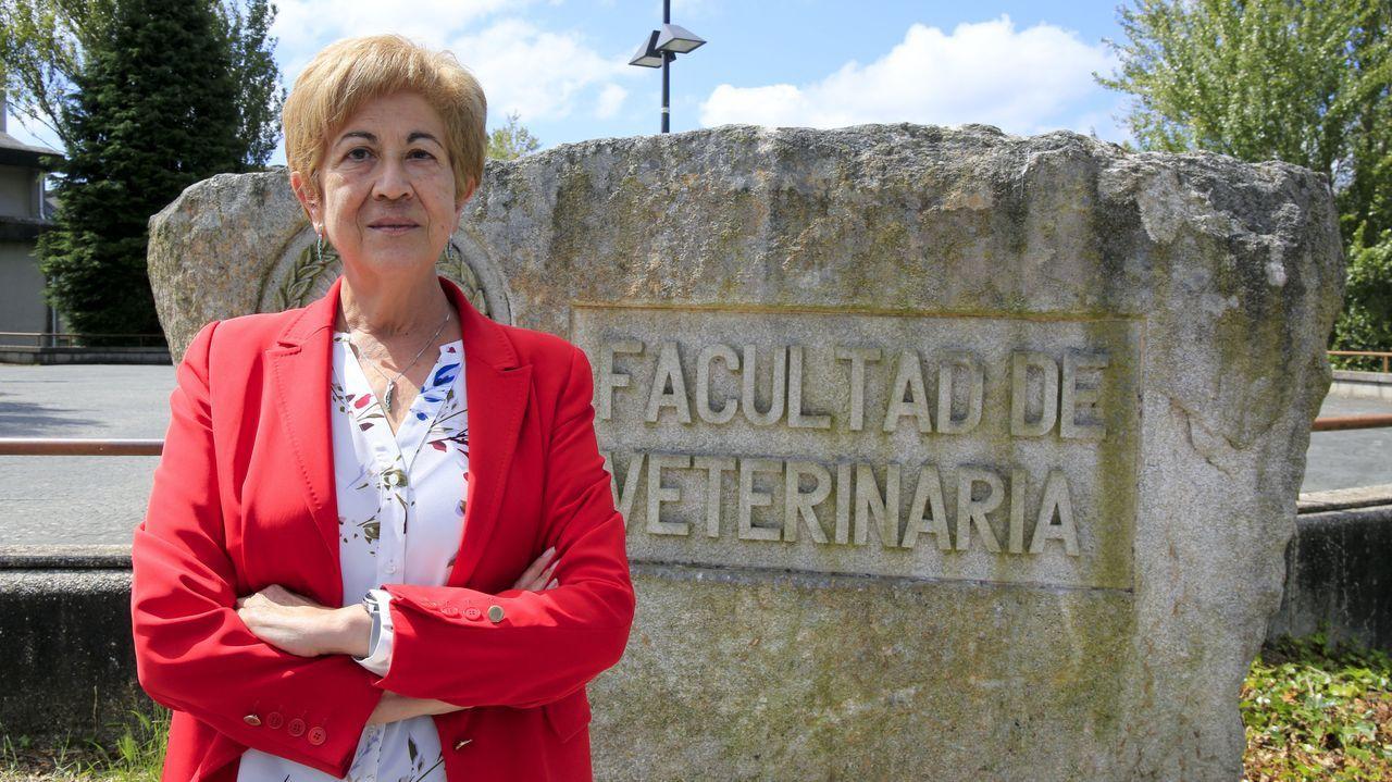 <span lang= gl >O casco vello énchese de artistas</span>.Las setas (en la imagen, en terrenos del municipio de O Corgo) son habituales en muchas zonas de Galicia