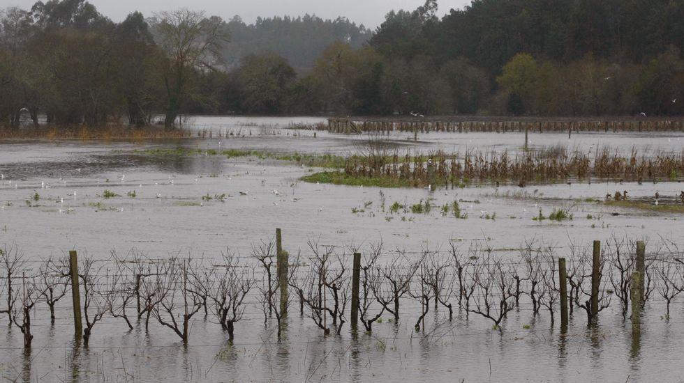 Río Umia desbordado en Meis.