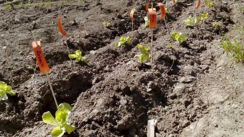 El cabreo de un cosechero por tener que pagar autónomos.Huerta de Almáciga. Plantación hecha por niños