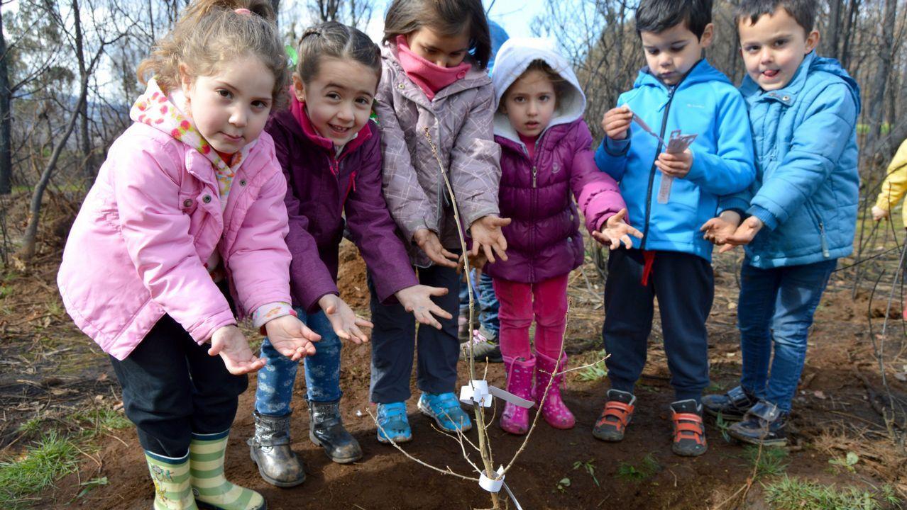 Plantación de árbores autóctonas no monte de Froxán