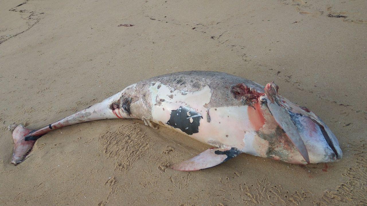 Reaparecen lasmedusas velero por la Costa da Morte