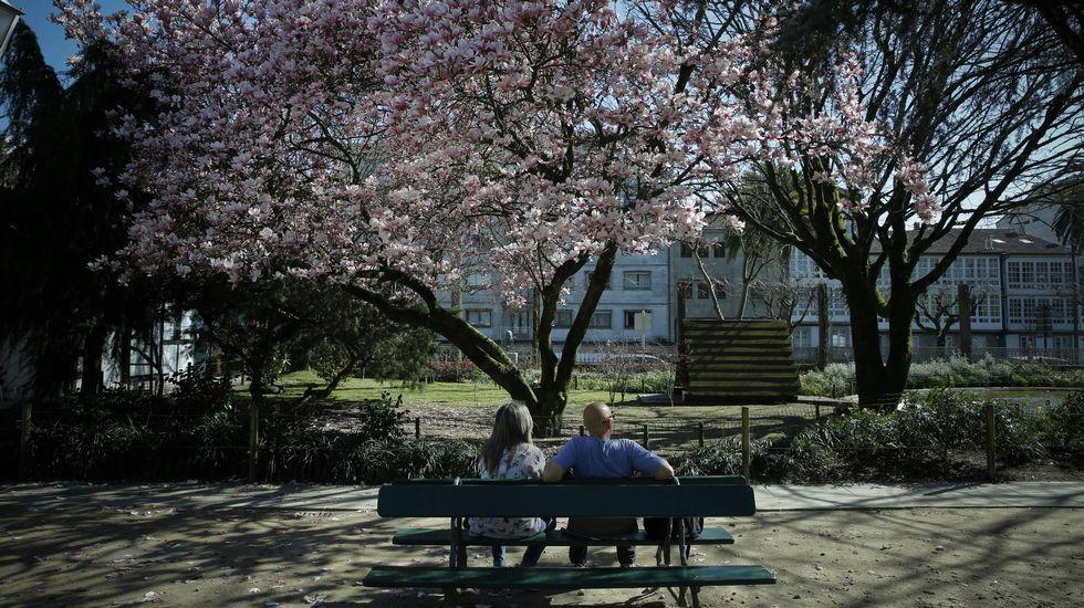 Los árboles, ya floreciendo, ofrecen estos días un auténtico espectáculo