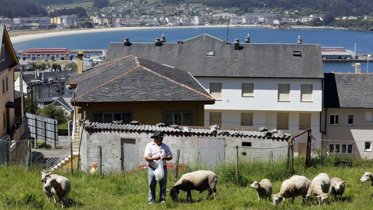 Antonio José Liborio, con parte de sus ovejas, en Celeiro, en una foto del 2019