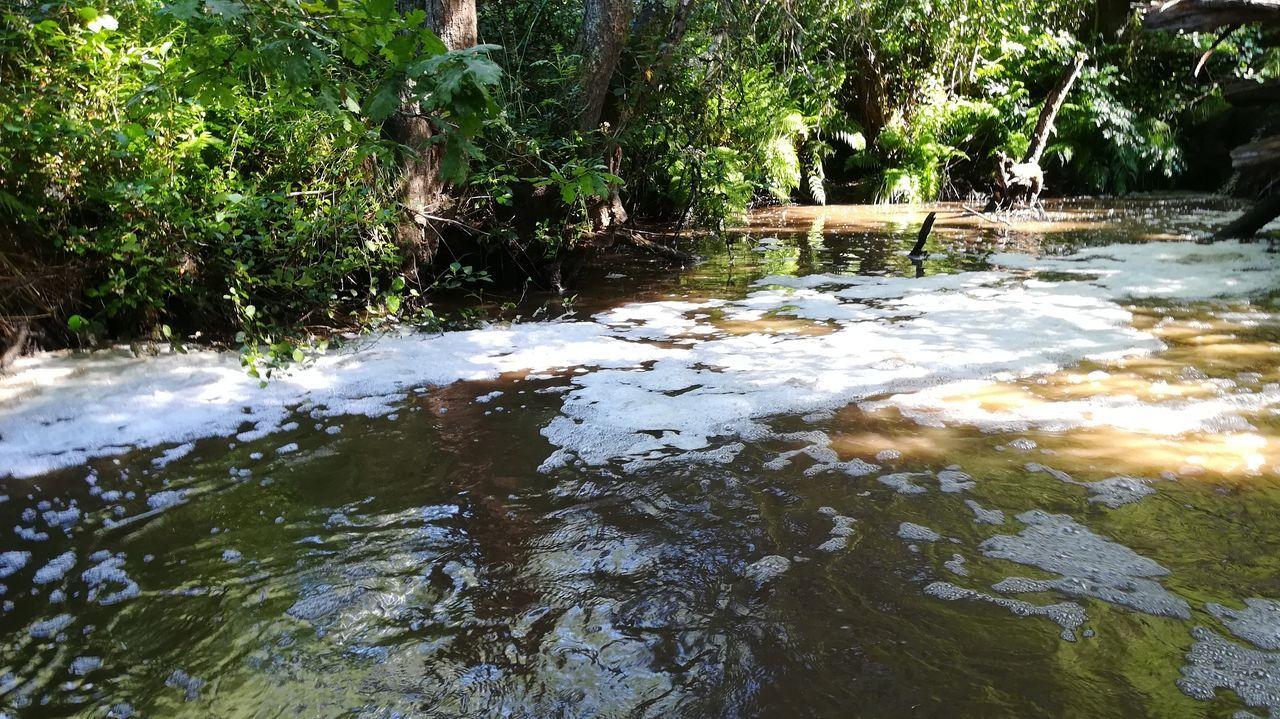 Vertido de purín en el río Furelos (Melide)