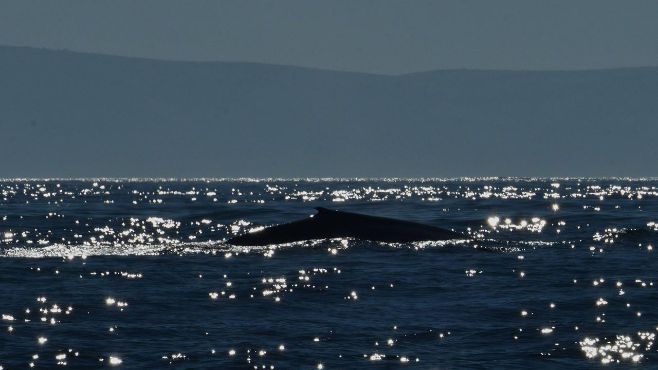 El gigante de los mares incluye Galicia en su ruta. Por primera vez en décadas se produce el avistamiento de dos ejemplares juntos, madre e hija