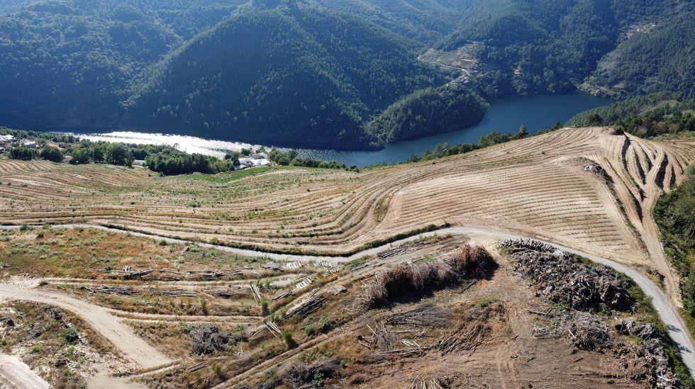 Presentación de la línea «Opti Pro» en el Campus de Lugo.La plantación se levanta sobre varias aldeas de la ribera del Miño entre Atán y Marce