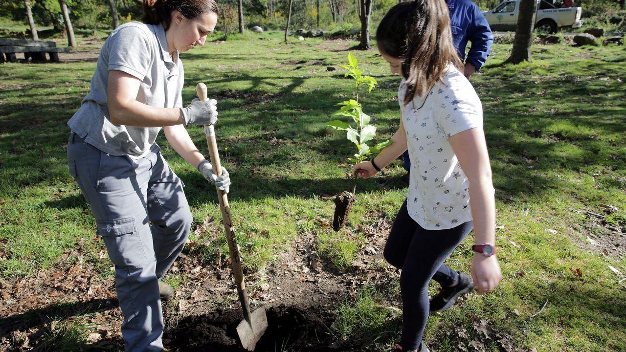 Alumnos de Carril plantan carballos y castaños en Fontefría.Una mujer pasea su perro protegida con mascarilla
