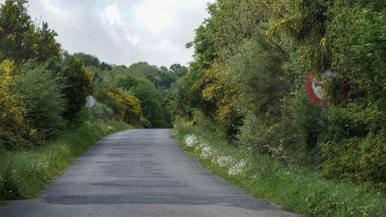 En algunas carreteras, como esta en Ourense, la vegetación impide ver las señales