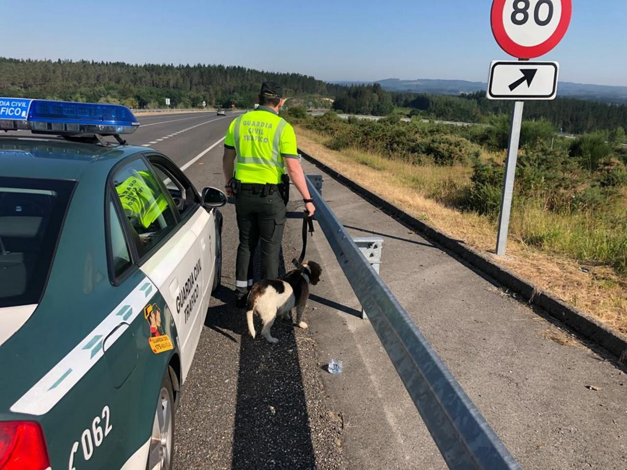 Rescatado un perro que vagaba por el corredor de Nadela a Monforte