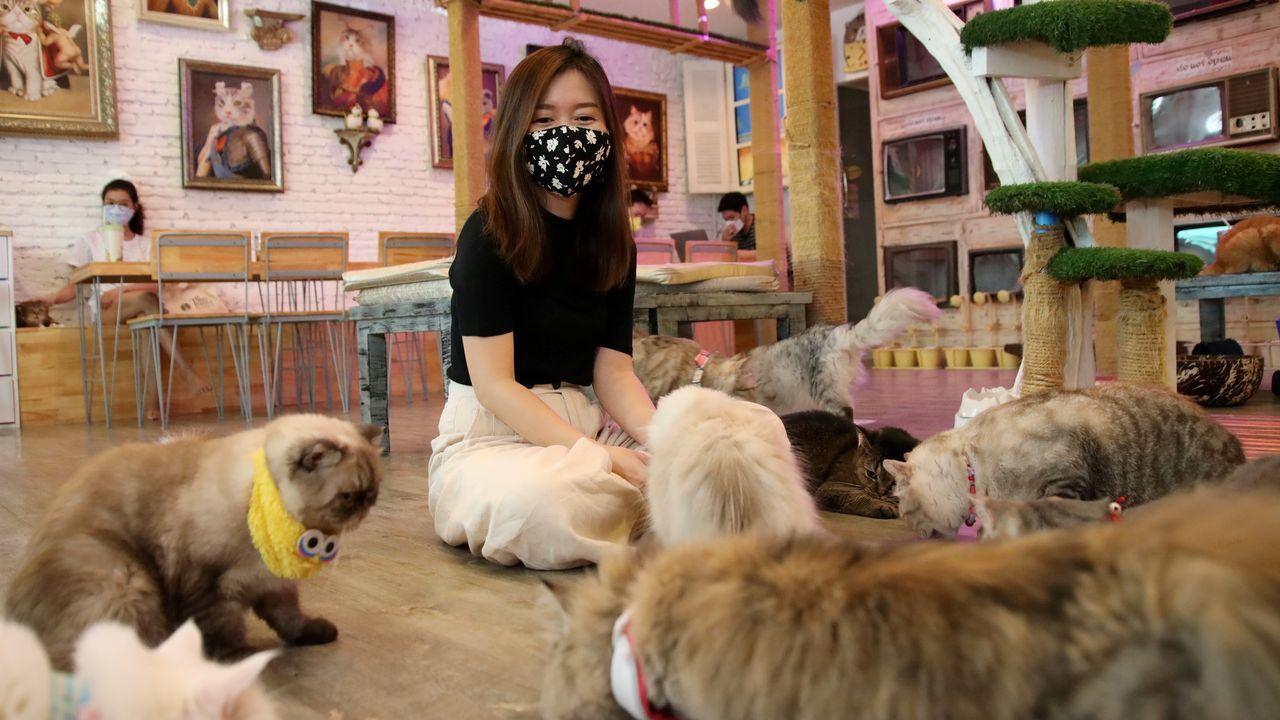 En Tailandia han empezado a reabrir algunas cafeterías. También las de gatos, a las que los clientes acuden con mascarilla
