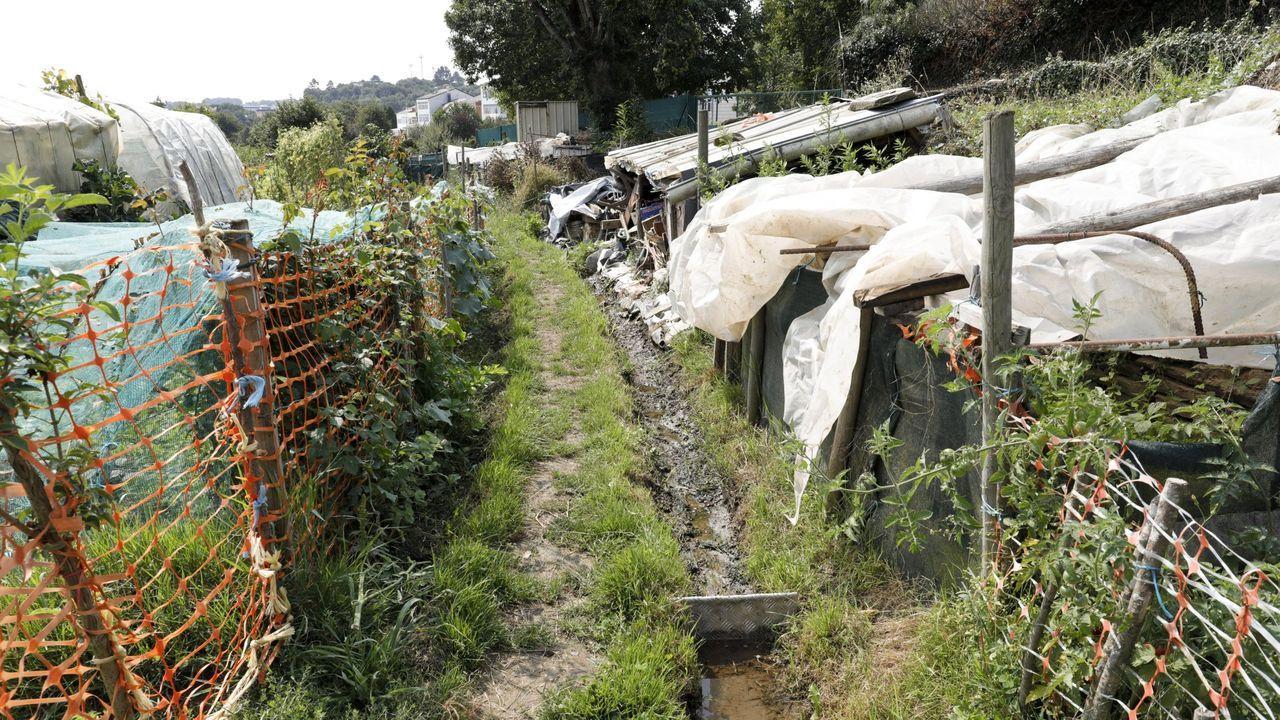 La recogida de arándano comienza en Galicia a principios de verano